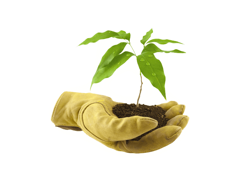 I Prodotti Fruitplant